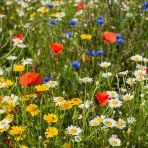 Kleurrijke mengsels bloemenzaden