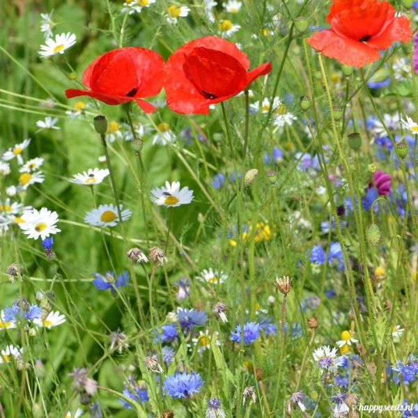 bloemenmix voor bijen