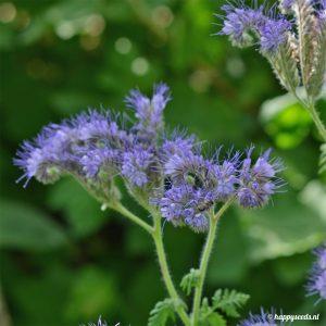 Hommel op bijenvoer bloem
