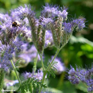 Bijenvoer