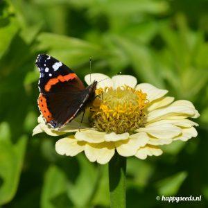 Bloemenmix voor vlinders