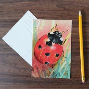 Lieveheersbeestje ansichtkaart