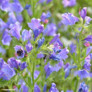 Top 10 voor bijen