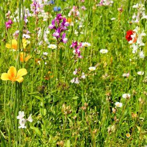 Bloemenweide met gras