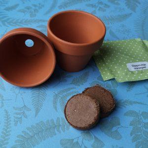 Terracotta potje, aardetablet en zaden – 10 stuks
