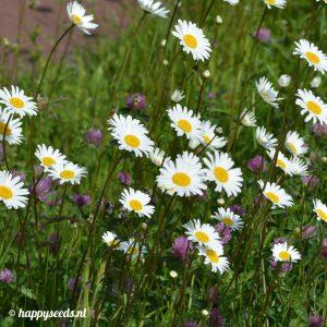 Overblijvende bloemenpracht